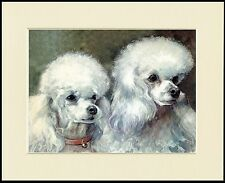 POODLE TWO WHITE DOGS HEAD STUDY LOVELY DOG PRINT MOUNTED READY TO FRAME
