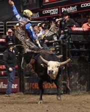 Home Decor Professional Bull Riders (PBR) Silk Poster 14x21 24x36