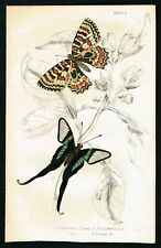 1837 White Dragon tail Butterfly, Hand-Colored Antique Entomology Print, Lizars
