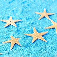 Wholesale 50Pcs Small Mini Starfish Sea Star Shell Beach Deco Craft DIY Making