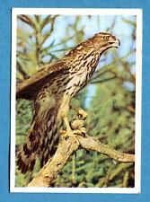 Figurina Panini-ANIMALI DI TUTTO IL MONDO 1965-n.194 - ASTORE -rec