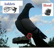 Decoy Pigeons , Hood , Anklets . Kit