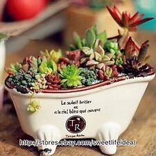 Ceramic Bathtub Cacti Succulent Plant Pot Flower Planter Mini Garden Design