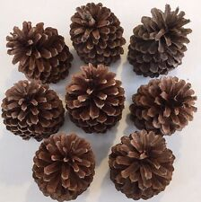 "8 PINE CONES Natural Large 4"" - 4 1/4 "" High ~ 2""- 2 1/4"" wide ~ Crafts"