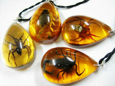LOTS 8PCS REAL SPIDER SCORPION YELLOW AMBER FINE MIX PENDANT&NECKLACE JEWELRY