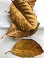 Dried Jackfruit Leaves Kataha Bio Film Organic Shrimp Betta Aquarium Ceylon