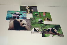 BAO BAO The Panda Bear Cub  #21
