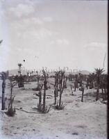 Maghreb Marocco Algeria Tunisia c1900, Negativo Foto Placca Lente VR9L1n15