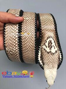 Very Unique Men's Belt - Genuine Snake Skin - Handmade Belt-Very Special