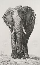 Wet and Dry by Lindsay Scott Art Print Poster - Elephant Wildlife Decor 13x19