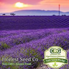 800+ Lavender Seeds Common English Lavender   Non-Gmo Garden Seeds