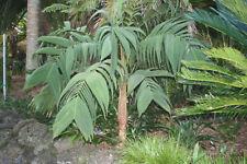 Plantas, semillas y bulbos subtropical sombra