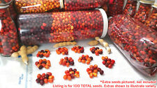 LOT 100+ Texas Mountain Laurel Seeds Red Planting or Jewelry - BULK $ AVAILABLE