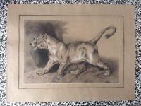 Dessin Ancien XIXe Magnifique Lionne aux aguets style Delacroix  non signé