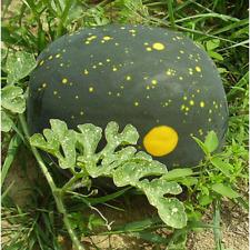 Watermelon Seeds Van Doren's moon and stars 10 seeds Ukraine D
