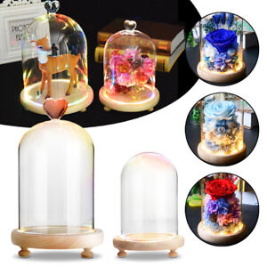 LED Light Glass Display Dome Cloche Bell Jar Flower Preservation Wooden  W