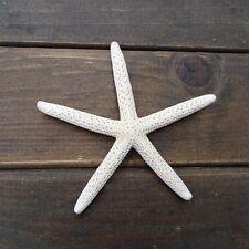 "12Pcs White Finger Starfish 2-4"" Beach Coastal Wedding Decoration Great Crafts"
