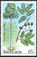 "SAINT LUCIA -1984- ""Gommier Tree"" - MNH Commemorative Stamp - Scott #651"