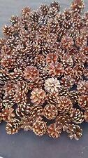 Lot de 100 petites pommes ou pignes de pin naturelles de 1cm à 3cm A décorer
