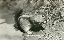 c1940 Rppc Postcard Golden Mantled Ground Squirrel, Oregon Caves Or 1627 Art Ray