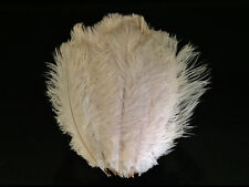 """Ostrich Feathers 
