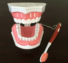 Dental Disease Teaching Teeth Study Education Model with Toothbrush