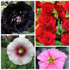 30 Hollyhock Flower Seeds Malva alcea 25 Kinds Perennial Beautiful Garden Plants