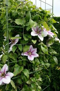 Flexigro Plant Wire Support Trellis Panels For Perennials, Climbers,Peas & Beans