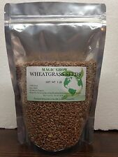 WheatGrass Seed 1LB(13,500+seeds)-Naturally Organic/NON-GMO-Guaranteed to Grow !