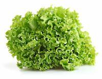 Greek curly lettuce 400  seeds Organic Non GMO