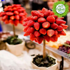 Strawberry Seeds Seed Plants Fruit Home Bonsai Garden 300Pcs Potted plant