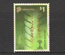 rhizome ว่านแมงมุม VERY RARE Herb *UNCLE CHAN*1 Cibotium barometz J.Sm.