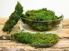 Plattenmoos konserviert apfelgrün ca. 250 g Lappenmoos Waldmoos grün haltbar