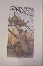 African Lion Cubs Peter Skirka Simba Baby Cub1983 LTD ED S/N Art Print