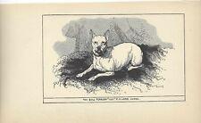 1900 Uk Original Dog Art Pen Ink Print Rh Moore Ch Miniature Bull Terrier