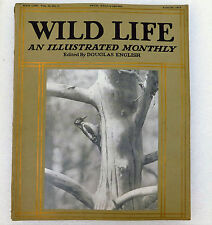 Wild Life illustrated magazine Douglas English Aug 1913 hawk butterfly Texel