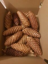"Pine cones 20x Large 5"" graded. Norway Spruce Fir Christmas decoration🌲"