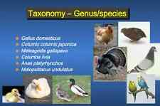 213 page Veterinarian DVM AVIAN BIOLOGY & CARE PowerPoint Presentation on CD