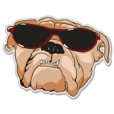 "Bull Dog Cool Shades car bumper sticker decal 5"" x 4"""