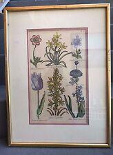 SIR JOHN HILL HAND-COLORED ENGRAVING BOTANICAL FLOWER STUDY