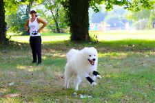 Nature Pet Sport Soft Wrist Bandage for dogs / Dog sport leg wrap