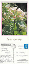 1994 EASTER GREETINGS SCRIPTURE VERSE ON BACK COLOUR POSTCARD