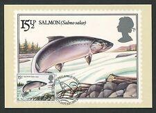 GB UK MK PESCE FISH Capecchi Poisson maximum carta carte MAXIMUM CARD MC cm d438