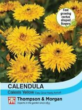 Thompson & Morgan - Flower - Calendula Calexis Yellow - 50 seed