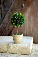 """Boxwood Topiary  6"""""""