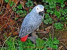 A SUPERB LIFE SIZE AFRICAN GREY PARROT FIGURE FOR HOME & GARDEN. VERY REALISTIC