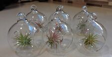 "6 Pack Mini 2"" Glass Plant Orb/Terrariums with Air Plants."