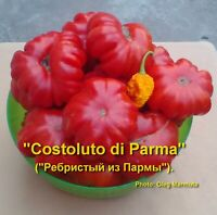 Costoluto Tomatoes - Three varieties with 20 seeds each - or both!