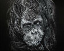 *Stunning * Orangutan Poster Print - Animal Ape Art Premium Wall Decor 16X20