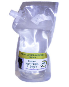 Live Saltwater Rotifers 1 Lt. Food for Clownfish Seahorse